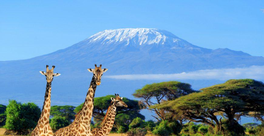 Mount Kilimanjaro landscape with giraffes in Tanzania